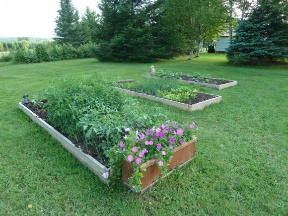 "Check out These Three Raised Beds Each 12' x 4' x 10"" Deep"